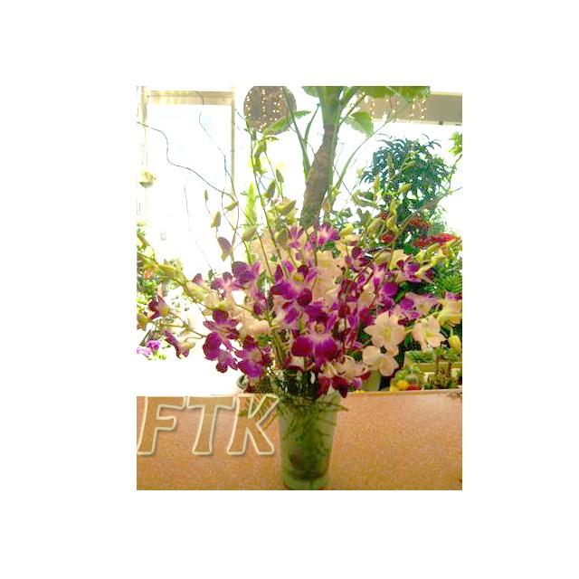 Dendrobium Orchid Grace