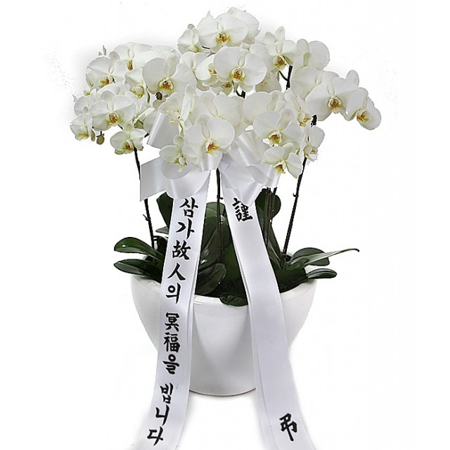 Sympathy & Funeral Orchid