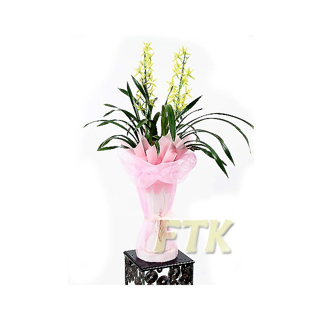 Oriental Orchid-Genji