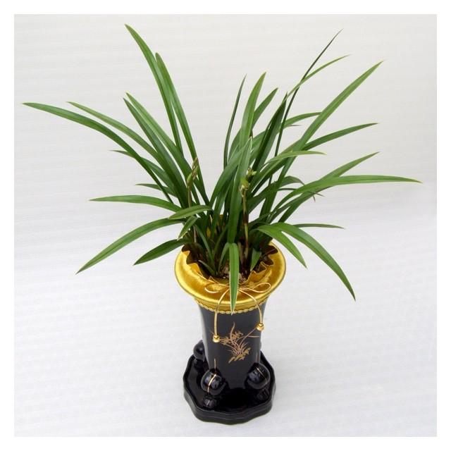 Oriental Orchid-Okhwa