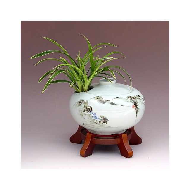 Oriental Orchid in Special Pot