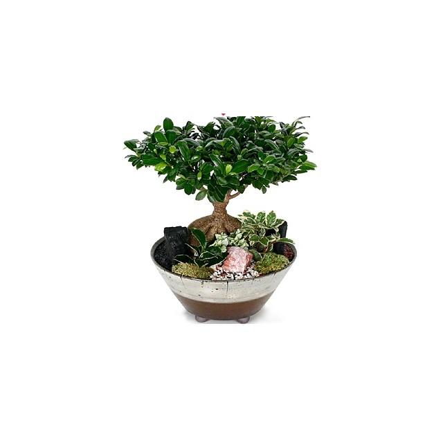 Bonsai Panda Tree
