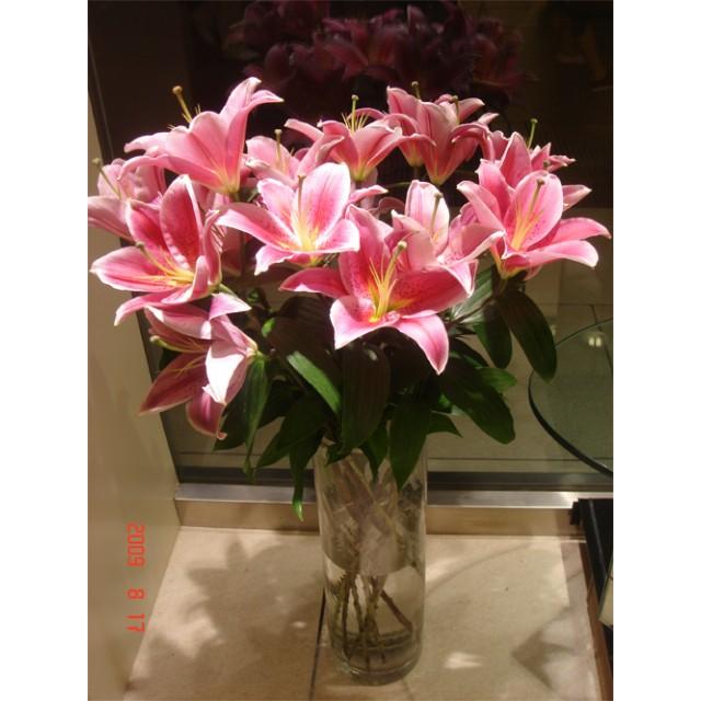 Star Lilies long stem