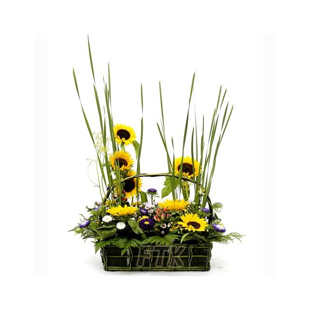 Sunflower and Daisy