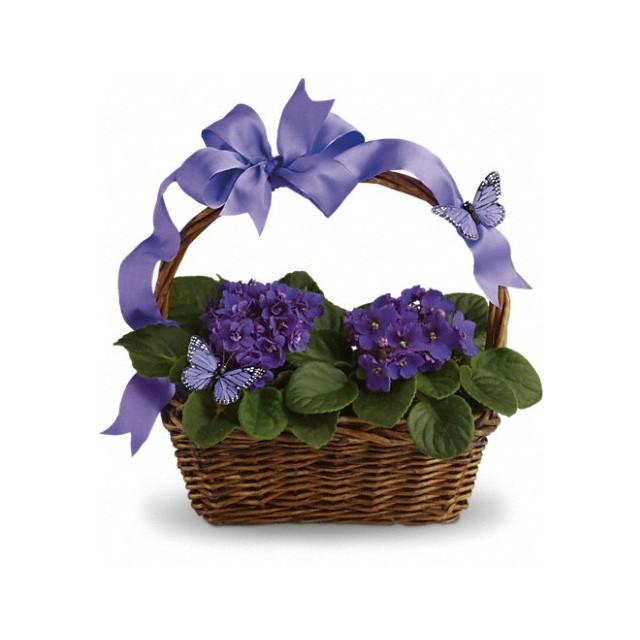 Violet Hydrangea